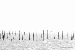 Bassin Arcachon 17