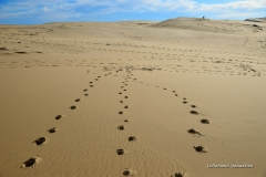 Dune du Pyla 2002