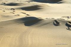Dune du Pyla 2032