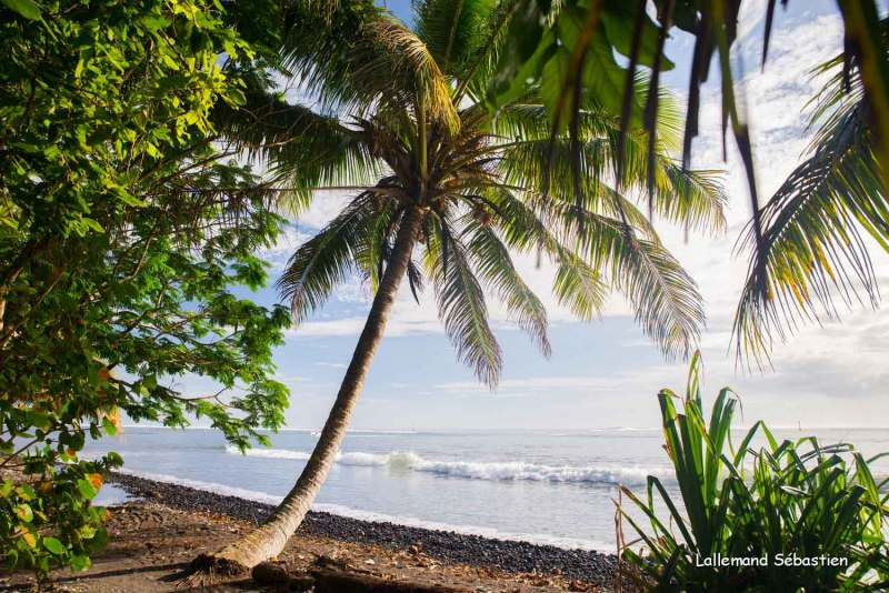 Tahiti 6267