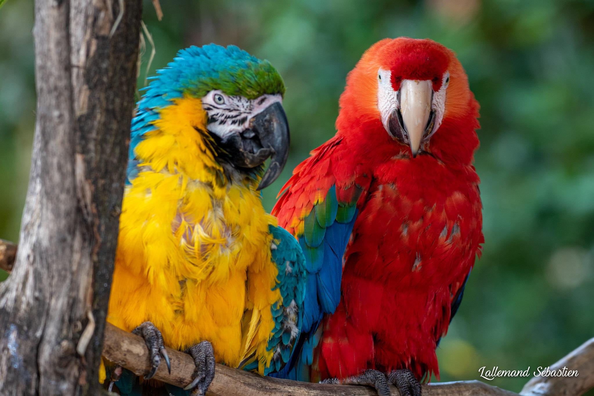 Découverte du Zoo de Pessac